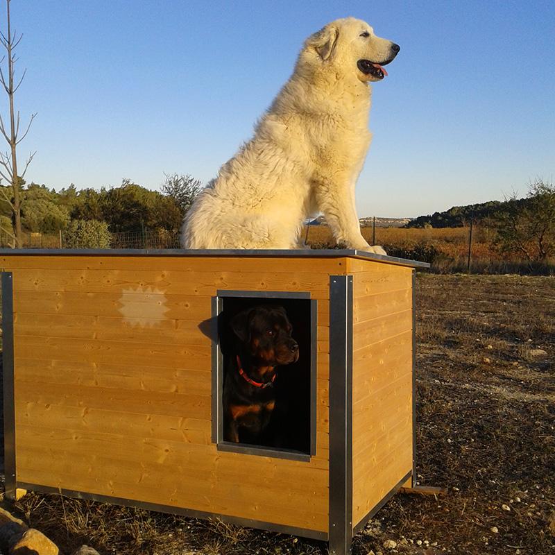 Chien niche pension canine